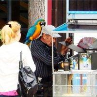 фотограф с попугаями :: Natali
