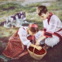 Поспели вишни. :: Olga Zhukova