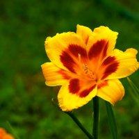 Цветы .... :: Argo Creator