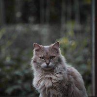 Кошачий пафос :: Валерия Репей