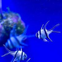Аквариумные рыбки :: Дмитрий Строж