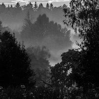 Лесной туман :: Павел Кочетов