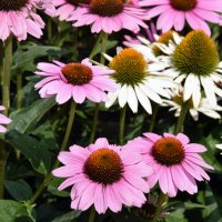 Цветы :: Яков Геллер