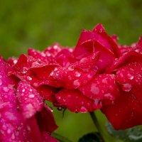 ...утром после дождя... :: Александр Филатов