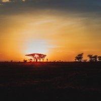 Рассвет в саванне... Танзания! :: Александр Вивчарик