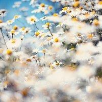 Ванильное лето. :: Лилия .