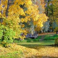 Осень в парке. :: Олег Попков