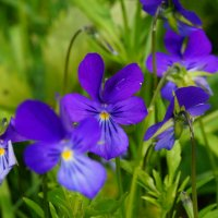цветы... :: Alexandr Staroverov