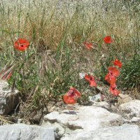 горные цветы :: tgtyjdrf