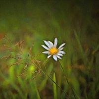 Печаль моя светла.... :: Tatiana Markova