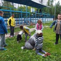собачки и дети :: Лариса Батурова