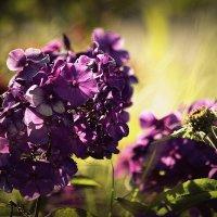 ..краски лета...июль... :: Влада Ветрова