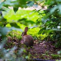 кролик :: Андрей Данилов
