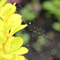 невидимая паутинка :: Ольга Шишкина