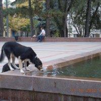 Ох, и вкусная вода в Пятигорске!!!))) :: Владимир Зайцев
