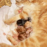 Муська с котятами :: татьяна