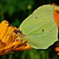 Вкушая нектар... :: Ирина Solo