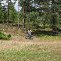 Велосипедистка в лесу :: Наталья