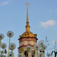 Одуванчики :: Olcen - Ольга Лён