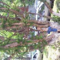 Волшебное дерево. :: Мария Владимирова