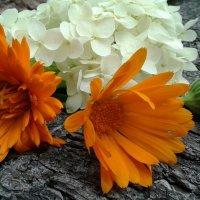 Цветы :: Ирина Белорусочка