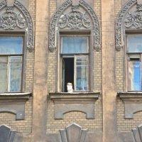 окна Петроградской :: Елена
