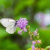 Цветы и бабочка :: Дима Пискунов