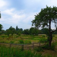 Старый сад :: Nina Yudicheva