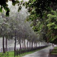 С кем поделиться дождём? :: Ирина Румянцева