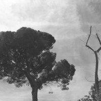 а есть ли в Природе зависть? :: Дарья Садовникова