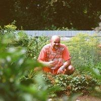Огородный вредитель... :: Евгений Золотаев