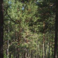 лес :: Вера Арасланова