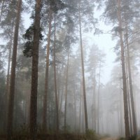 Дорога  в туман.... :: Валерия  Полещикова