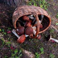 Первые грибы :: Альберт Казачёк