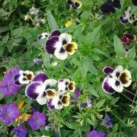 Цветы :: марина ковшова