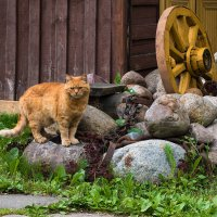 Кот, почти учёный... :: Ирина Климова