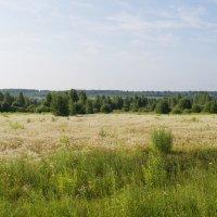 Русское поле :: Андрей Зайцев