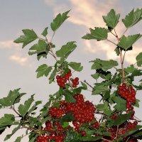 КраснА ягода. :: Николай Масляев
