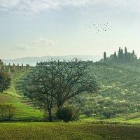 "Грачи прилетели .  Из серии ""Toscana - amore mio"" :: Ашот ASHOT Григорян GRIGORYAN"
