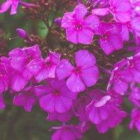 в цвету :: Yana Odintsova