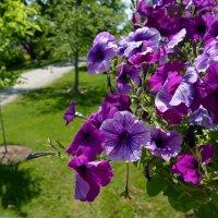 Прогуливаясь по дорожкам сада Kingsbrae Gardens (New Brunswick, Canada) :: Юрий Поляков