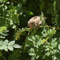 в зарослях) :: linnud