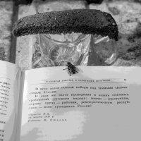 Из жизни мух :: Павел Самарович