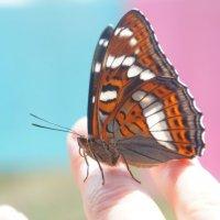 Бабочка :: Арина