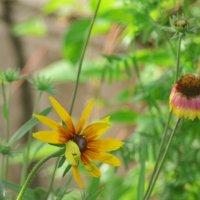 Цветочные мотивы :: galina tihonova