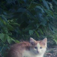 Рыжий Кот :: Дмитрий Барабанщиков