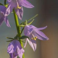 Flower_45 :: Trage