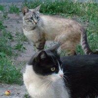 Кошки нашего двора.... :: Алекс Аро Аро