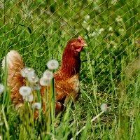 красавица) :: linnud