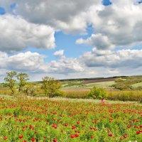 Немного яркой весны, или цветут пионы степные. :: Владимир Горбунов